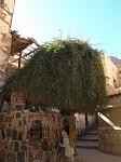 Куст терновника на месте, которого явился Бог Моисею в монастыре Святой Ека
