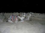 Ночное путешествие в синайских горах
